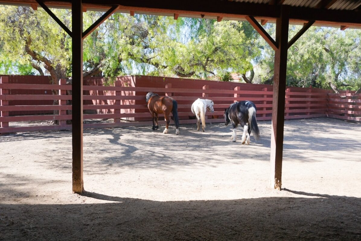 rancho los alamitos, long beach, field trip, homeschool, things to do with kids in orange county, things to do with kids during covid, free things to do with kids, horses, barnyard
